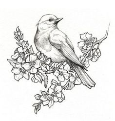 Beautiful bird drawings medium pencil drawing birds pic beautiful pencil drawings of birds pencil beautiful bird . Pencil Drawings Of Flowers, Bird Drawings, Animal Drawings, Drawing Sketches, Tattoo Drawings, Drawing Flowers, Bird Pencil Drawing, Drawing Art, Sketches Of Birds