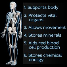 the 6 functions of the skeletal system