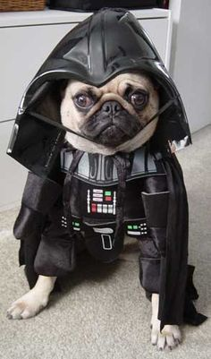 My dog needs a darth vader costume - and my boyfriend's chihuahua needs a yoda one...