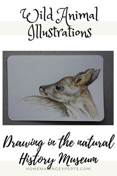 drawing and aquarelle/watercolor at the natural history museum. Inspiration and ideas for contemporary nature and wildlife art. Living In Europe, Natural History Museum, Drawing Projects, Urban Sketching, Wildlife Art, Pet Portraits, Austria, Artists, Autumn