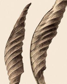 leaf photographs from artist jeff friesen