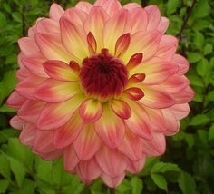 The New Dahlia's I planted today! | BecomeAnEX