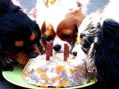 cavalier birthdays
