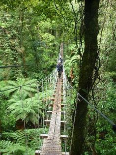 Rotorua Canopy Tours - Rotorua, New Zealand...I should have done this while I was in rotorua