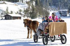 Pony-Pferdekutschenfahrten im Feriendorf // Pony horse drawn carriage rides in the holiday village Pony Horse, Horse Drawn, Baby Strollers, Horses, Holiday, Adventure, Baby Prams, Vacations, Prams
