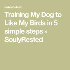 Training My Dog to Like My Birds in 5 simple steps » SoulyRested