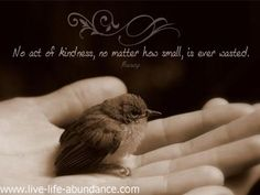 no act of kindness no matter how small is ever wasted - Google Search