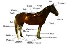Equestrian Words - I should print this for some of my beginners
