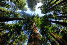 magical trees 33 Mystical, magical trees (35 photos)