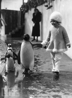 strolling in black and white...I so remember watching the penquins take their daily walk down the street and around the corner in Scotland