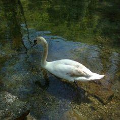 Sourse of river Bosnia, Ilidža, Sarajevo Bosnia, River, Natural, Animals, Animales, Animaux, Rivers, Nature, Animal