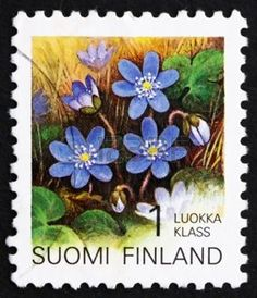 FINLAND - CIRCA 1992: a stamp printed in the Finland shows Hepatica, Flower, circa 1992 photo