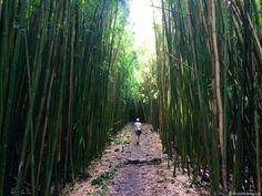 Hawaii, Maui- Road Tp Hana: hier findest du viele Tipps und einen ausführlichen Reisebericht auf http://www.worldwideweindl.com/maui-hawaii/