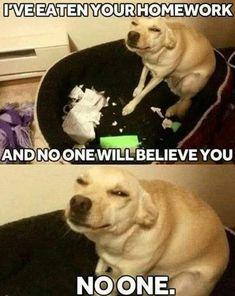 Pet Memes, Cat And Dog Memes, Funny Dog Memes, Funny Cats And Dogs, Really Funny Memes, Funny Relatable Memes, Funniest Memes, Memes Humor, Humor Quotes