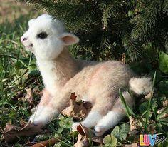 fluffy baby llama
