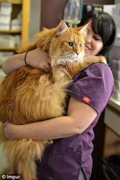 Giant cats make good things to hug
