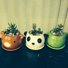 Panda Bear and Frog plant pots.