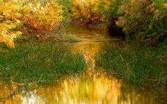 Estanque, agua, naturaleza, árboles, hojas, otoño, hierba, naturaleza, agua wallpaper