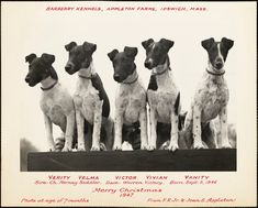 Barberry Kennels, Appleton Farms, Ipswich, Mass. Merry Christmas 1947, from J.R., Jr. & Joan E. Appleton - Digital Commonwealth Family Photo Album, Family Photos, Christmas Cards, Merry Christmas, Puppy Sitting, White Puppies, Historical Society, Commonwealth, Farms