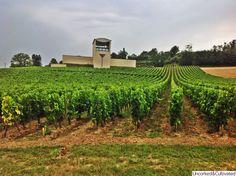 Chateau Faugeres vineyard