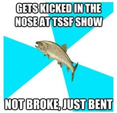 Pop punk trout