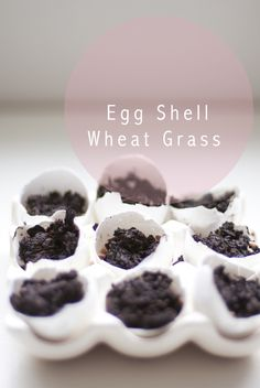 wheat grass in egg shells