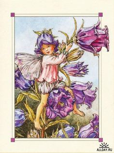 Illustration for the Canterbury Bell Fairy from Flower Fairies of the Garden. A young boy fairy sits in a canterbury bell plant, ringing one of the flower bells. Author / Illustrator Cicely Mary Barker Plus Cicely Mary Barker, Fairy Land, Fairy Tales, Violet Garden, Fairy Pictures, Vintage Fairies, Beautiful Fairies, Fantasy Illustration, Illustration Flower