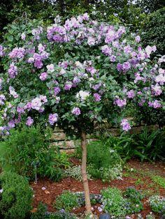 árboles ornamentales para jardín