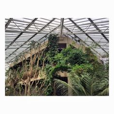 The Barbican Conservatory .worth checking out . Free to look round . Take a sketch book or camera . Check the website for opening hours . Only seems to be open on Sunday's  Photo Credit : Laura Elizabeth Instagram Thetaintedcherry
