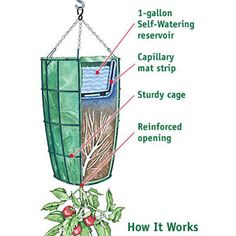 Gardener's Revolution Upside-Down Tomato Planter - The Green Head