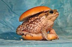 Frog burger