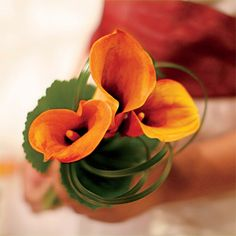 Orange Calla Lily Bouquet . The flower girls carried mini mango calla lilies collared with loops of lily grass.