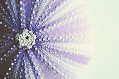 Sea Urchin, love the pattern