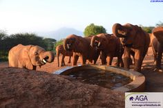 Elefanten sind Herdentiere, deshalb ist der Kontakt zu ihren Artgenossen sehr wichtig. Im Elefantenwaisenhaus bilden die kleinen Elefanten eine neue Herde, nachdem sie ihre ursprüngliche Herde oft durch Wilderei verloren haben. Der Kontakt zu den anderen Elefantenwaisen ist für die Tiere sehr wichtig. Nairobi, Elephant, Animals, Wildlife Conservation, Elephants, National Forest, Animales, Animaux, Animal