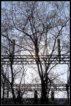 Tree vs steel vs light