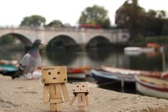 A Danbo photo by Anita Russell