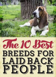 Some of my most favorite breeds (pugs, english bulldogs, French bulldogs) are on this list...I see a pattern here...
