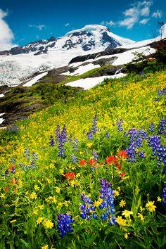 Wildflowers on Mount Baker Washington