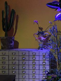 French Vintage, Colours, Plants, Plant, Planets