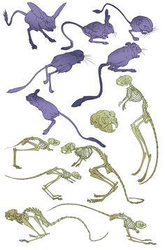 Long Eared Jerboa, Kangaroo Rat, Character Art, Character Design, Animal Anatomy, Slip And Fall, Sculpture Ideas, New Dolls, Rodents