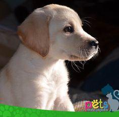 Buenos días    #PetsWorldMagazine #RevistaDeMascotas #Panama #Mascotas #MascotasPanama #MascotasPty #PetsMagazine #MascotasAdorables #Perros #PerrosPty #PerrosPanama #Pets #PetsLovers #Dogs #DogLovers #DogOfTheDay #PicOfTheDay #Cute #SuperTiernos