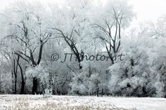 8x12 Photograph frozen fog covered trees in central by JTPhotoArt, $35.00