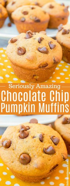 Chocolate Chip Pumpkin Muffins. #fall #pumpkin #muffin Pumpkin Chocolate Chip Muffins, Pumpkin Cookies, Pumpkin Dessert, Vegan Pumpkin, Pumpkin Bread, Pumpkin Pumpkin, Healthy Pumpkin, Pumpkin Puree, Pumpkin Carving