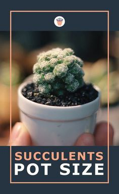 Choosing the perfect sized pot for your succulent plant can be challenging. Lots of sources claim you should give them lots of room to grow. But is this really necessary with succulents? Find out how to perfectly size the pot for a healthy, happy succulent. #succulentpotsize #perfectplanter #succulents Succulent Gardening, Succulent Care, Succulent Pots, Planting Succulents, Container Gardening, Outdoor Plants, Air Plants, Outdoor Gardens, Cactus Terrarium