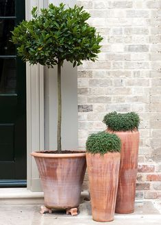 Front door flower pots are the best way to show your love of plants. See the best flower pot ideas! Back Gardens, Outdoor Gardens, Potted Trees, Trees In Pots, Potted Olive Tree, Topiary Trees, Plantas Indoor, Decoration Plante, Italian Garden