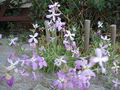 Pin Pa Kwiaty Jednoroczne