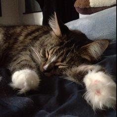 Fuzzy fuzzy cute cute /squeal