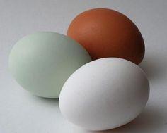 """Osterbäckerei ohne Ei? Fünf pflanzliche Alternativen Häufige Lebensmittelskandale und der industrielle Missbrauch von Hühnern für die Lebensmittelindustrie lässt viele Verbraucher aufhorchen. Besonders in verarbeiteten Produkten wie Kuchen und Gebäck verstecken sich oft Eier aus sogenannter """"Kleingruppenhaltung"""", einer besonders qualvollen Form sogenannter """"Nutztier""""-haltung. Der VEBU stellt einige Alternativen vor."""
