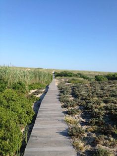 Our path to the beach.