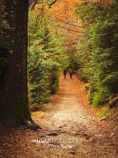 Autumn in Ordesa Valley, Otoño en el Valle de Ordesa, Parque Nacional de Ordesa y Monte Perdido, Heartwonders photography